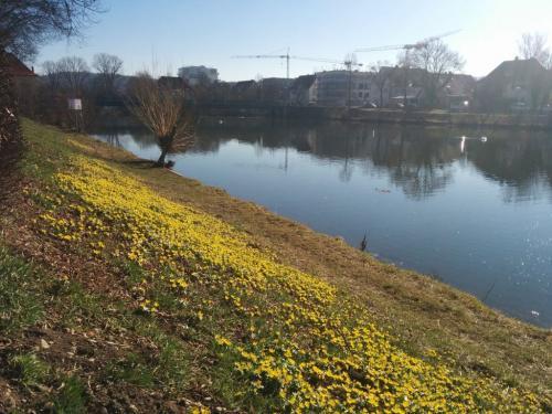 Frühlingsstimmung Stocherkahnsaison startet